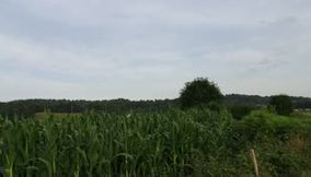 France lovely green corn field