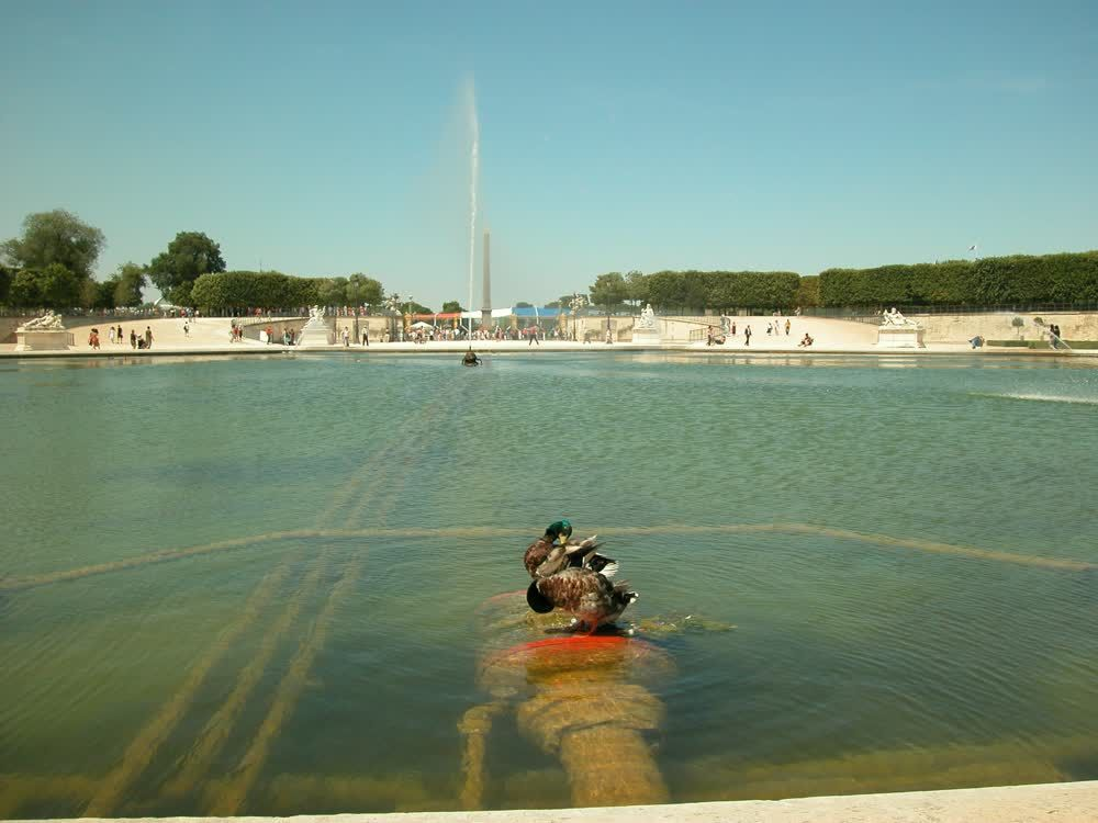title: Ducks in the Water at Jardin des Tuileries Paris France