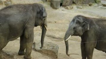 Elephants Baby at Zoo Anvers ofBelgium