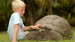 Boy caressing a giant tortoise Seychelles