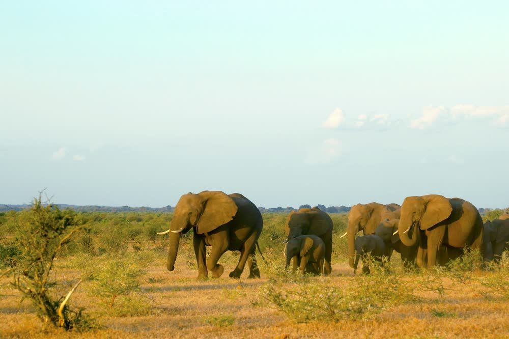 Elephants in Northern Tuli Game Reserve Botswana