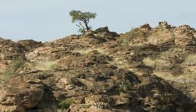 title: Lonely shrub Northern Tuli Game Reserve Botswana