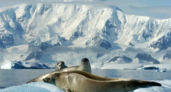 title: Seals CHILE Patagonia Antartica