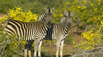 BOTSWANA Northern Tuli Game Reserve