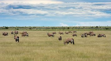 title: Wildlife in Central Kalahari Game Reserve