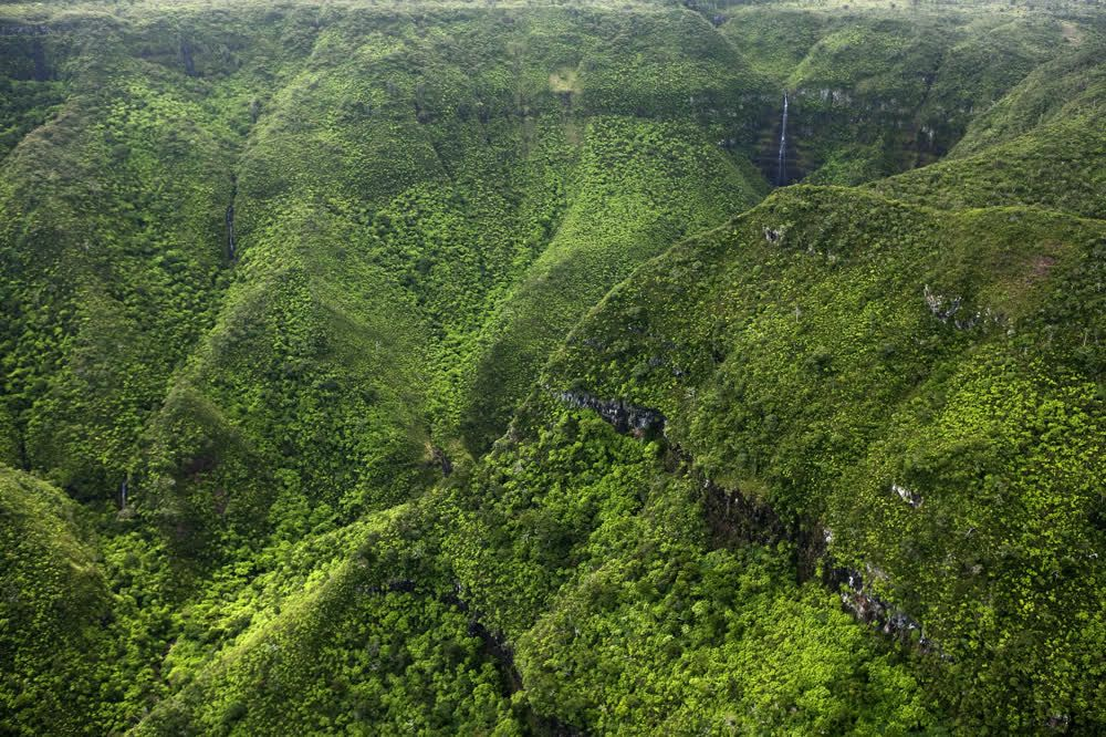 title: Black River Gorges Nationalpark Mauritius