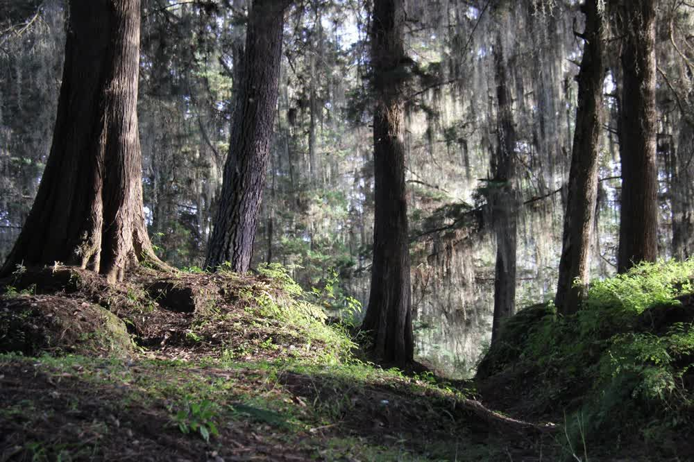 title: Forest in Gumarkaj Guatemala