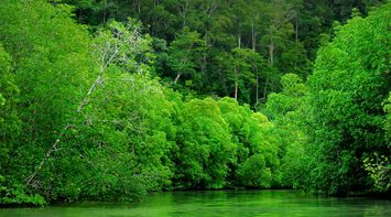 Gorgeous green lands Langkawi