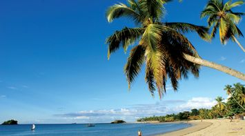 Palm trees on the beach Madagascar