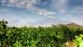 Vineyards Armenia