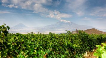 title: Vineyards Armenia