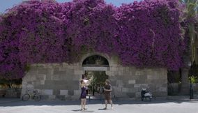 title: Bougainvillea Kos Greece
