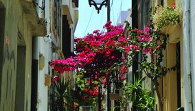 title: Lovely flowers Rethymno Crete Island Greece
