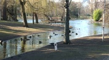 title: Video of Ducks Swimming in the Lake of Stadtpark in Vienna Austria