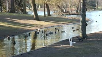title: Video of the Calm Serene Environment of the Stadtpark in Vienna Austria