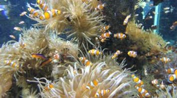 Discover Monaco Amazing Nemo at the Oceanographic Museum Monaco