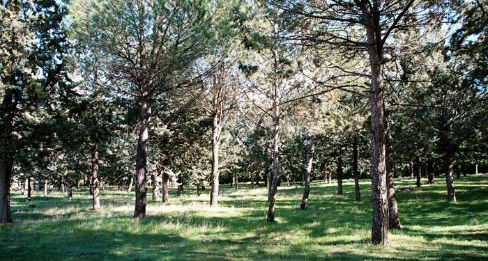 title: Beauty of Anjar Nature and Trees