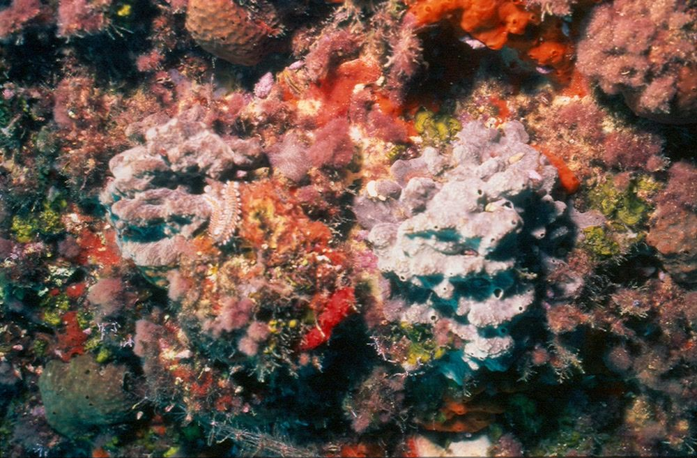 title: Orange and colorful coral reefs of the sea