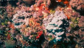 Orange and colorful coral reefs of the sea