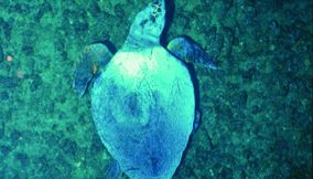 title: cute sea turtle animal