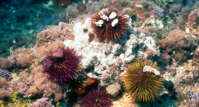 title: multicolored sea urchins underwater