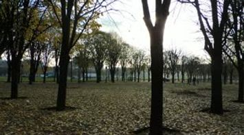 A Peak at the Jardin des Tuileries in the Fall Weather