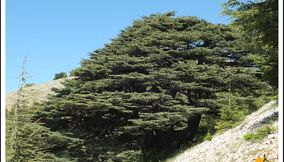 Barouk Maaser el Shouf Cedars Forests