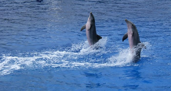 title: Dancing dolphins