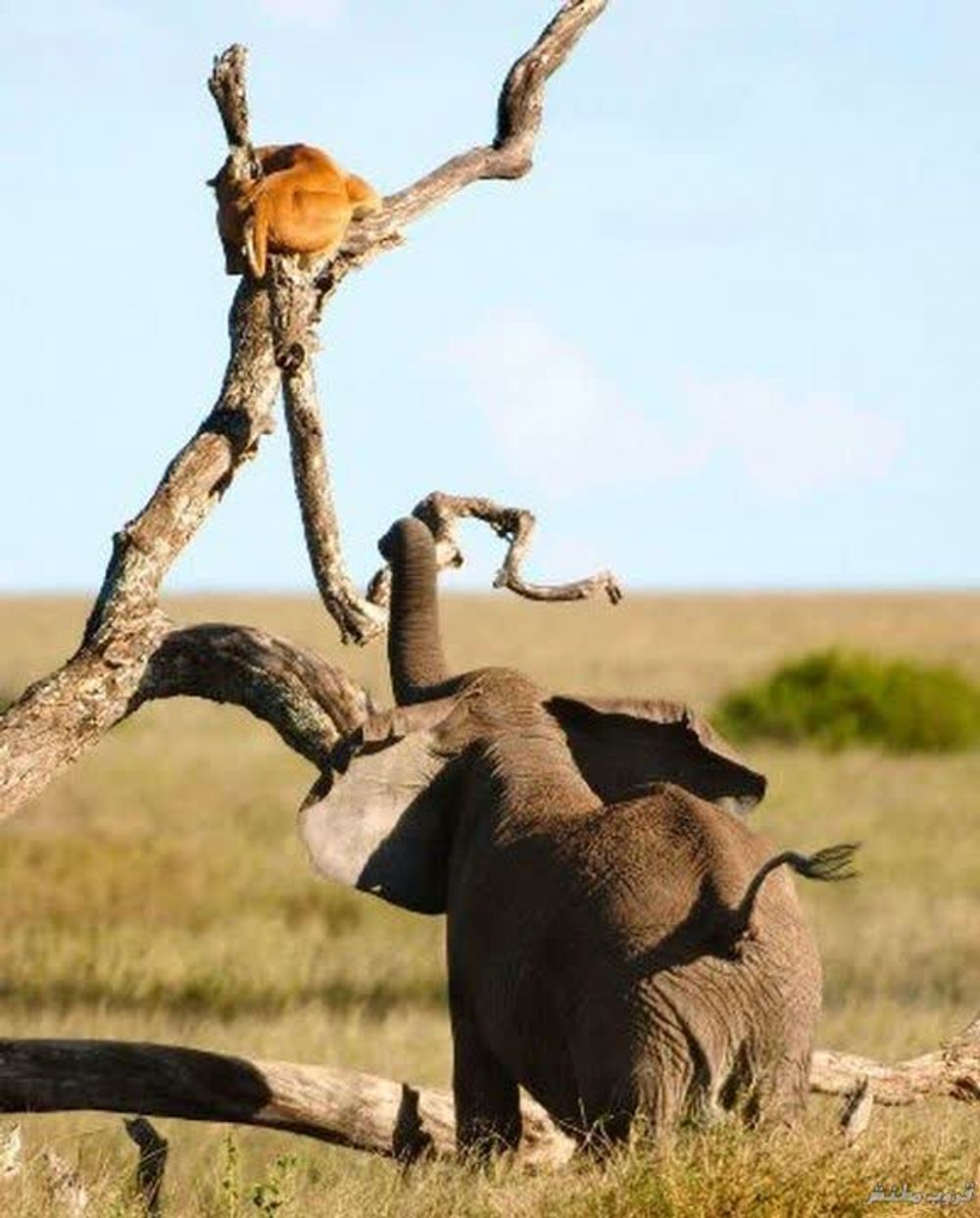 title: Animals grappling