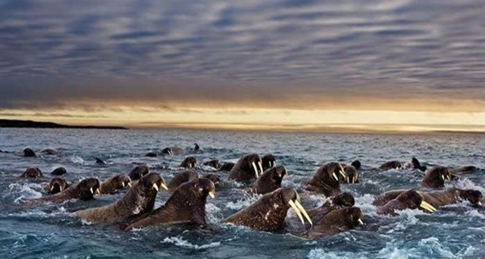 title: Wonderful shots of animals during migration