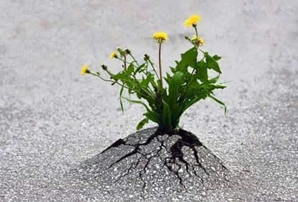 Life always finds a way !