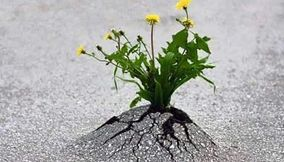 title: Life always finds a way