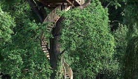 Tree House from around the world