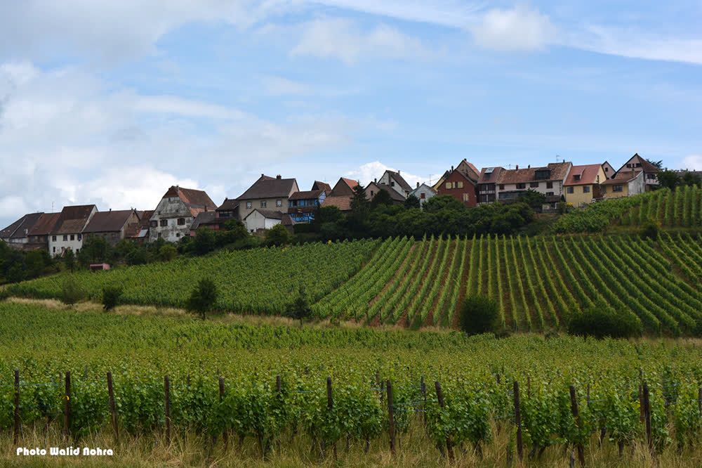Wine Road - Alsace