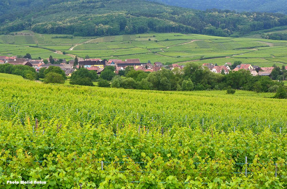 title: Wine Road Alsace