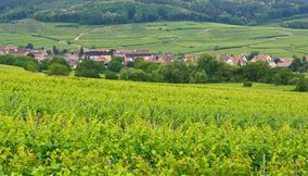 Wine Road Alsace