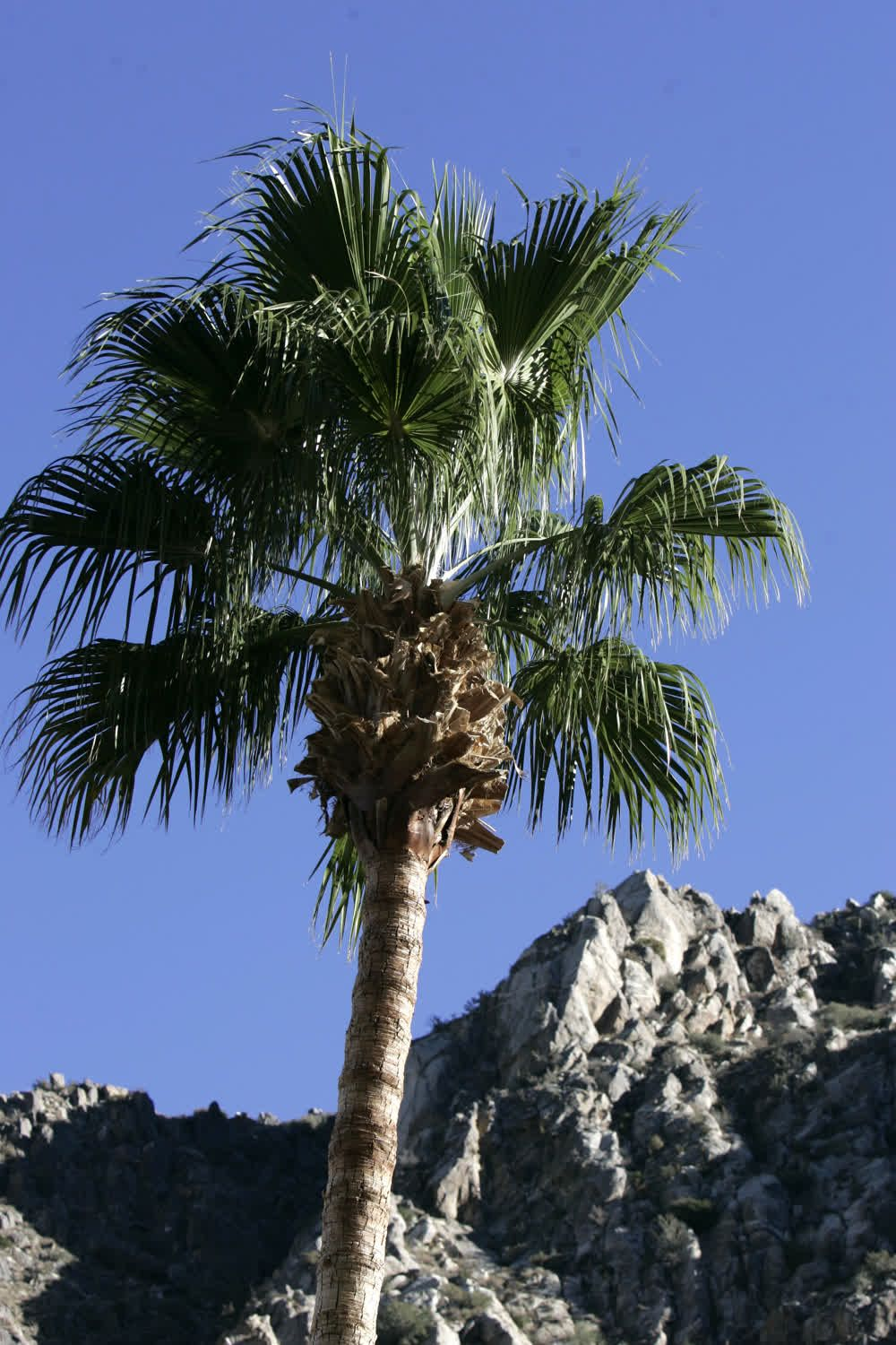 title: Palm Springs