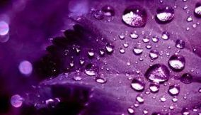 Purplish Purple
