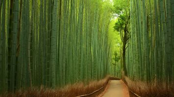 title: Bamboo Forest Japan