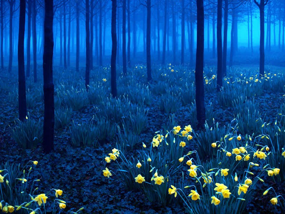 title: Black Forest Germany