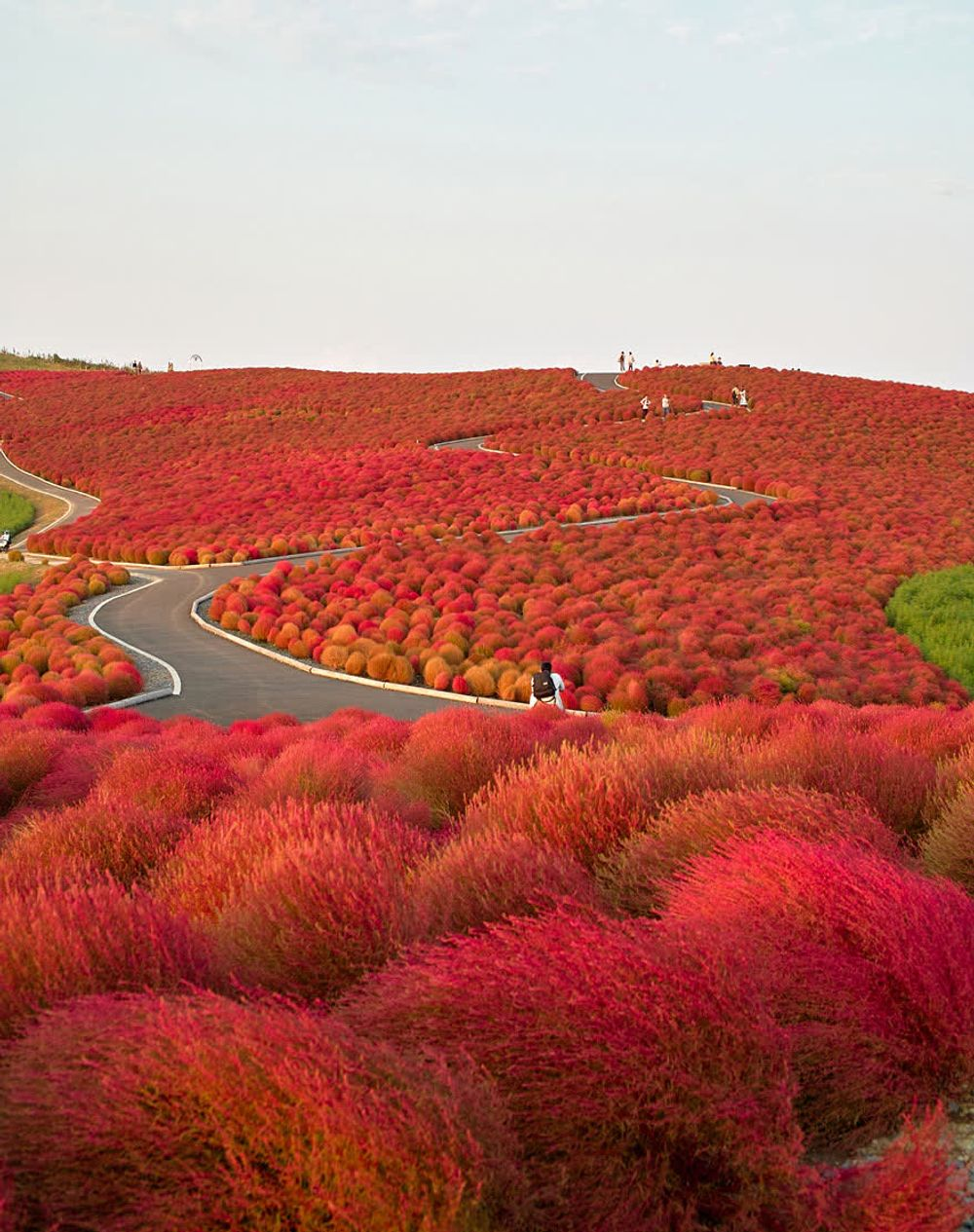 title: Hitachi Seaside Park Japan