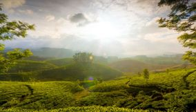 Tea garden hill of Munnar