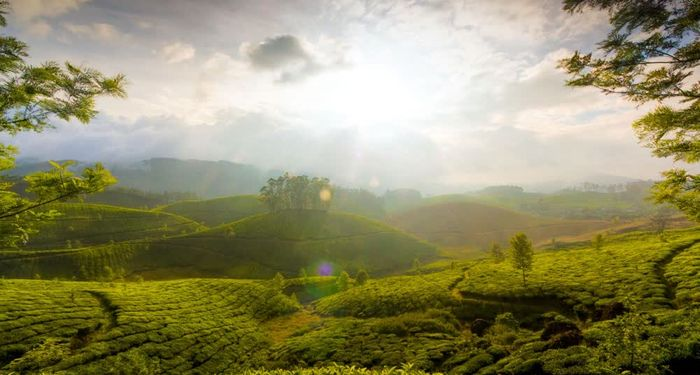 title: Tea garden hill of Munnar