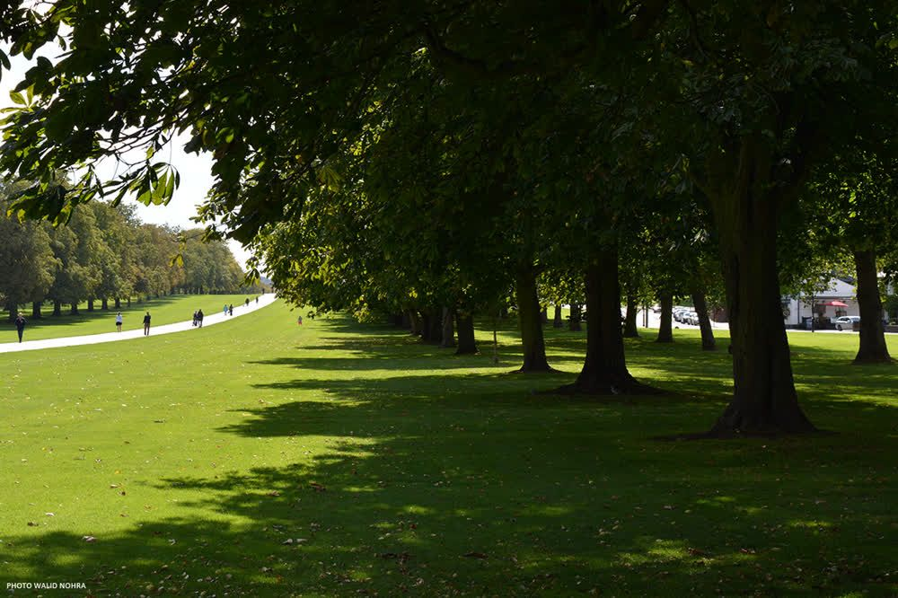 title: Windsor Great Park