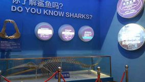 Sharks Skeleton at Beijing Aquarium