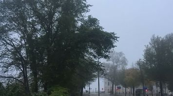 Foggy Dutch Morning